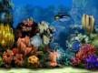 Marine aquarium 2.0